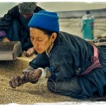 Ladakhi woman gleans barley for monastery