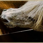 close up of horse biting another horse