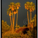 vertical landscape of palm trees with lush vegetation and dark sky