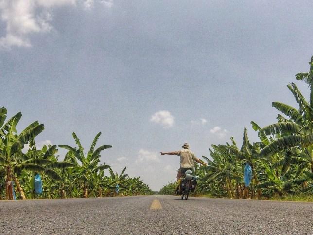 Mexican banana plantations