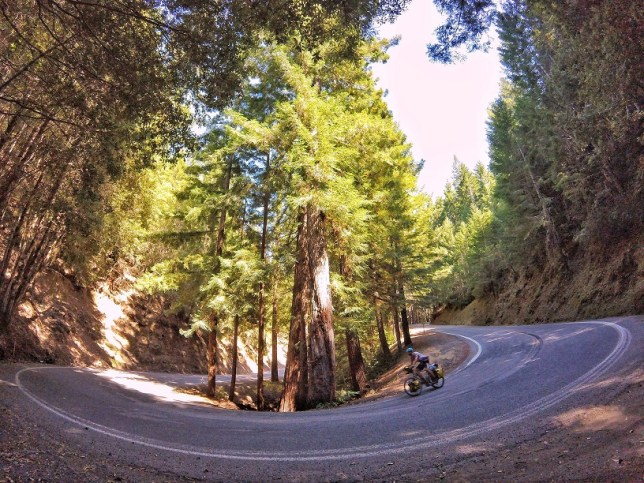 Redwoods hairpin