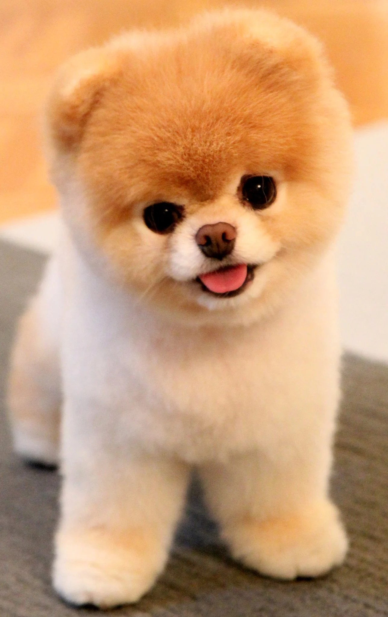 Fullsize Of Why Are Dogs So Cute
