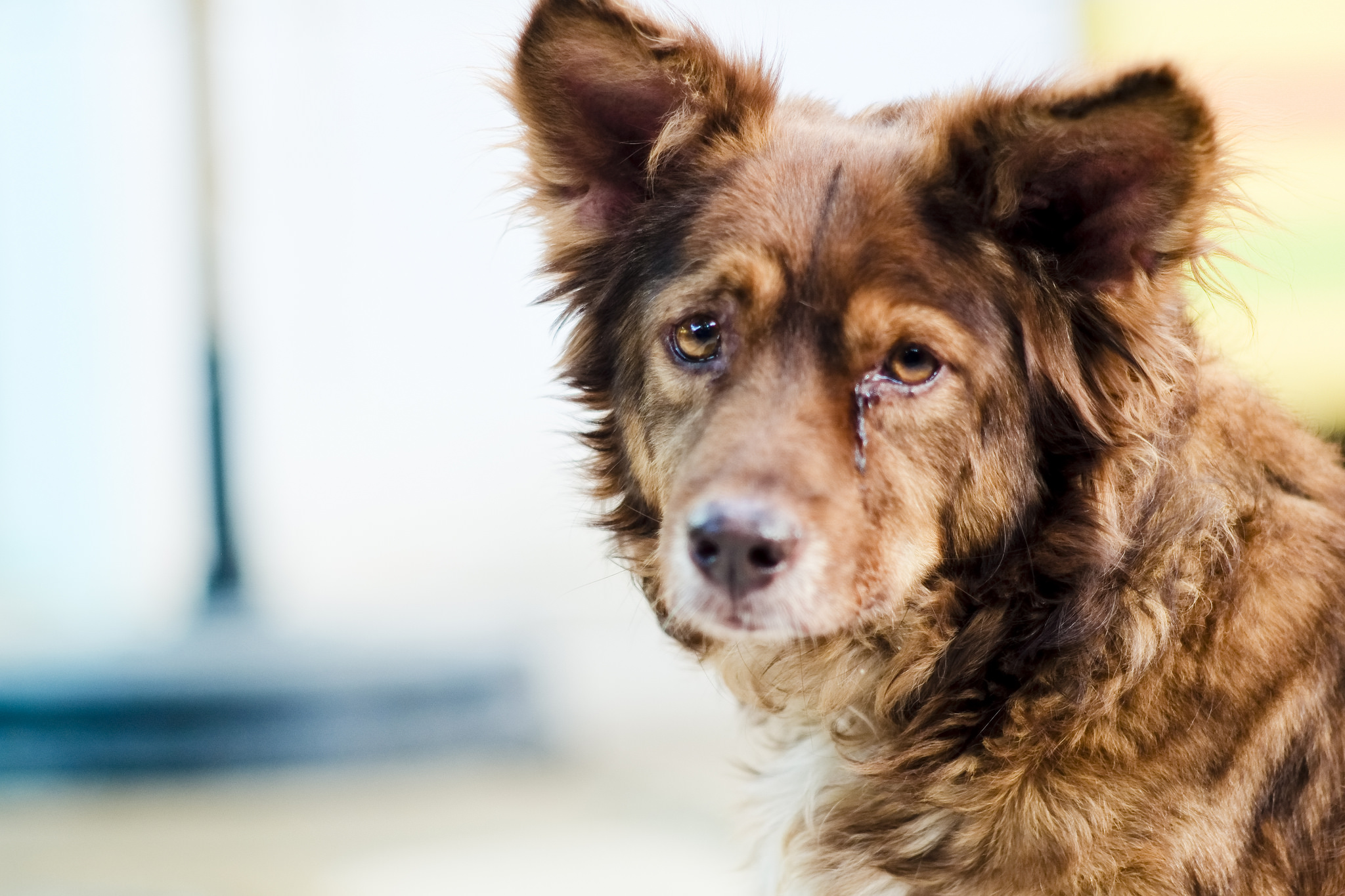 Smashing Specks Blood Signs Your Rover Dog May Be Sick Time To Call Signs Your Rover Dog May Be Sick Time To Call Vet Dog Throwing Up Bile What To Do Dog Throwing Up Bile houzz-03 Dog Throwing Up Bile