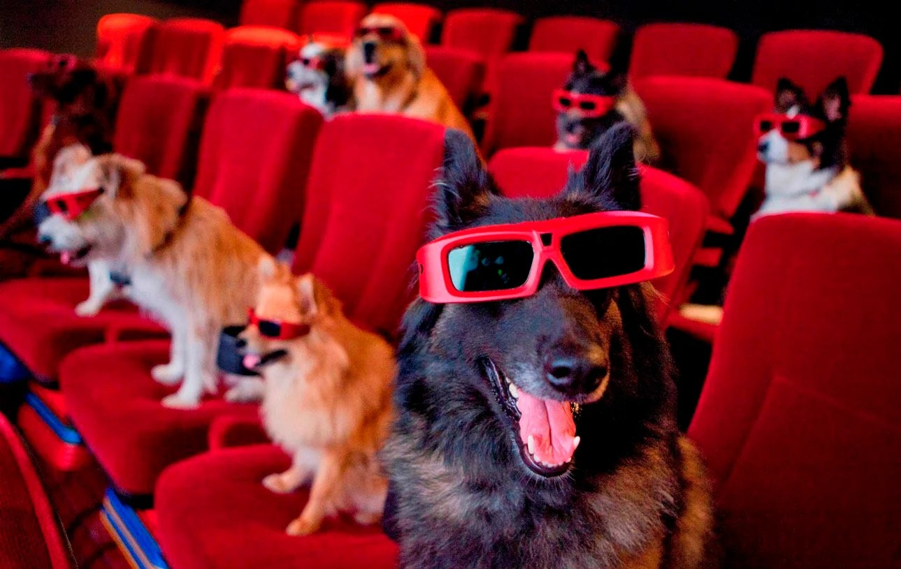 Dashing Dog Movies You Can Stream On Netflix Dog People Dog Movies You Can Stream On Netflix Dog People By Sad Dog Movies On Netflix 2018 Sad Dog Movies 2015 bark post Sad Dog Movies