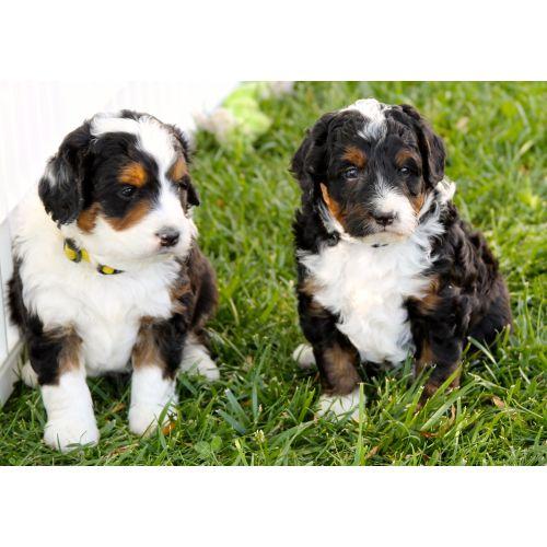 Medium Crop Of Dog Breed Identification Quiz