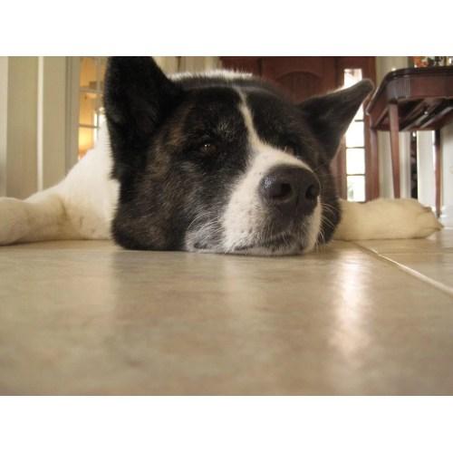 Medium Crop Of Calmest Dog Breeds