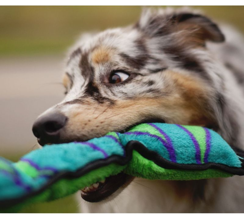 Large Of Why Do Dogs Like Squeaky Toys