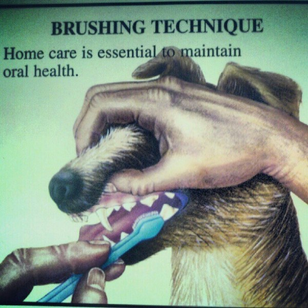 How to brush a dog's teeth - funny canine toothbrush technique