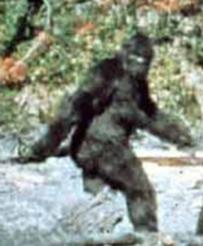 still-shot from the famous Patterson-Gimlin Bigfoot video