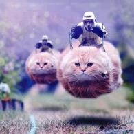 cats, 74-Z speeder bike, imperial scouts, photoshop, star wars