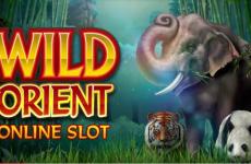 wild-orient-slot
