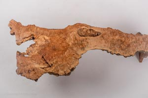 Spalted-Thumbnail