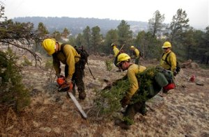Photo of forest firefighters