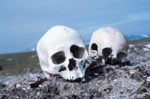 Skulls D of S