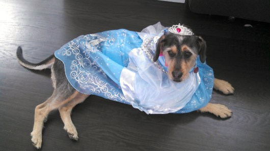 Cinderella the dog.
