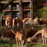 How to choose Disney hotels for Walt Disney World Marathon Weekend