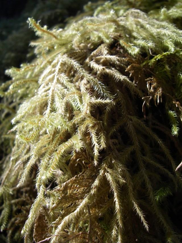 16 Moss