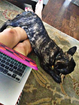 Hugo, French Bulldog, Dog, Our LIfe with Hugo, RunStylish