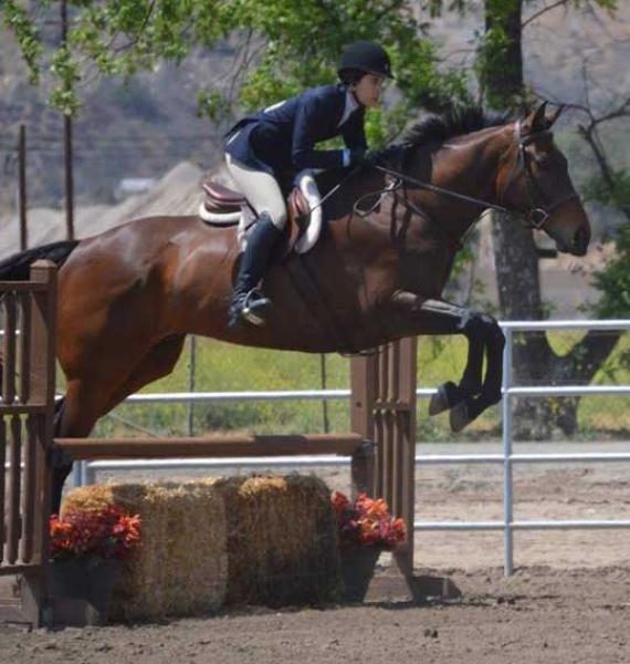 Ruocco Equestrian