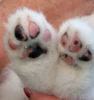 puppy-paw