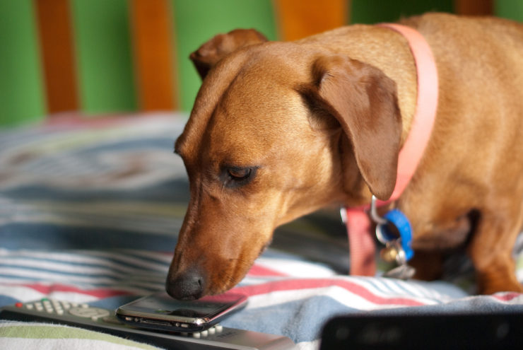 doxie and iphone