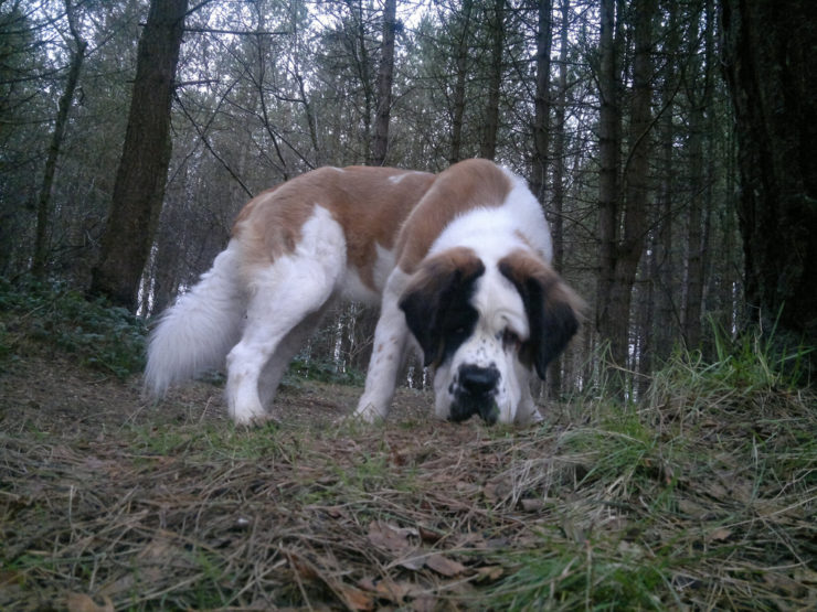 Can You Train A Rescue Dog To Hunt