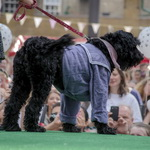 black russian terrier pup show