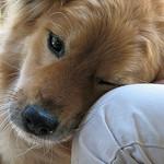 trusting dog