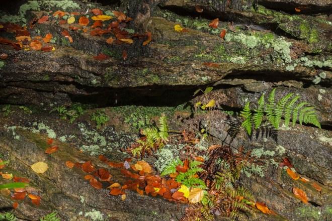 Autumn Rockface #2