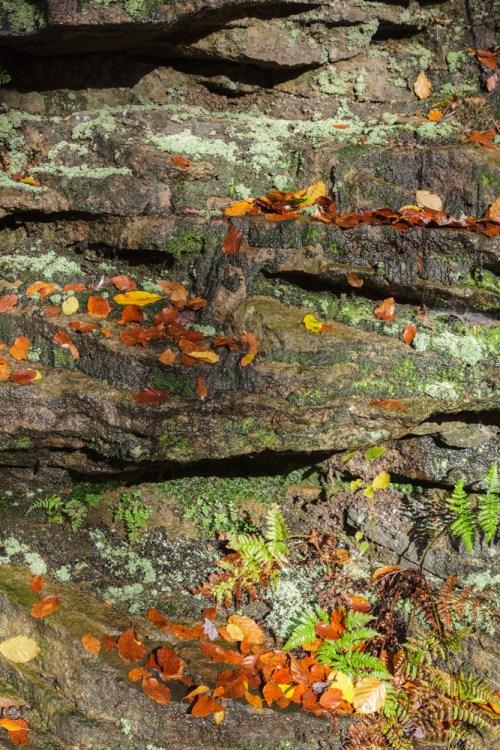 Autumn Rockface
