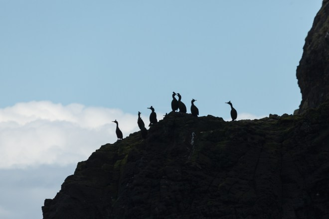 Shags On The Cliff