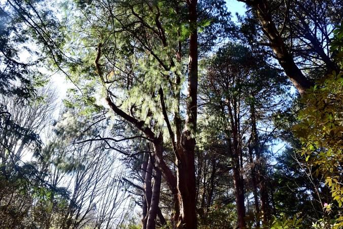 parque_botanico 2
