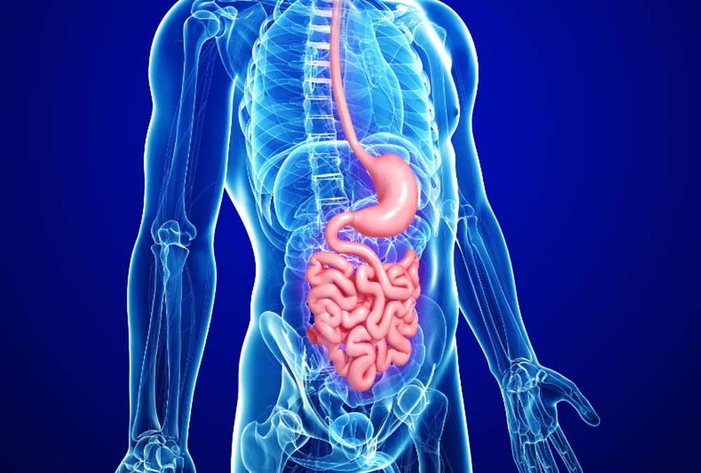 El microbioma intestinal: la nueva frontera de la medicina moderna