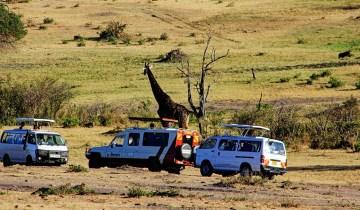 Maasai Mara_Giraffe2