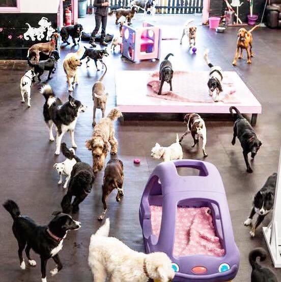 bandeath-dog-shelter-fundraiser