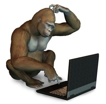 Perplexed Gorilla with Laptop