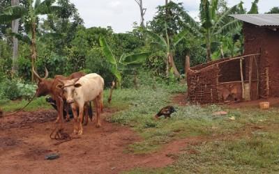 Uganda-farm-600x375