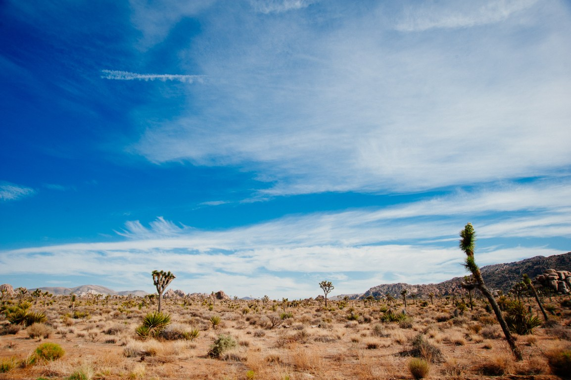 Joshua Tree National Park, CA - Wide Open