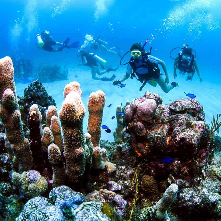 scuba_dive_coral_reef
