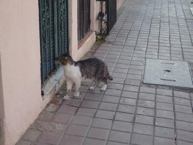 El Gato in Old Town