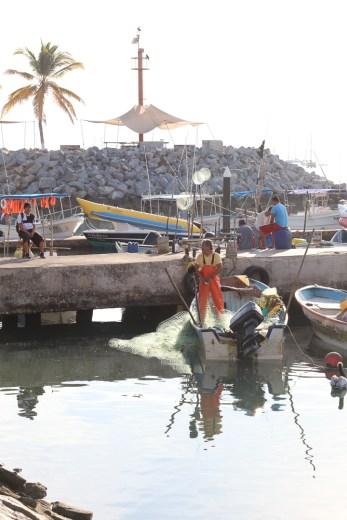 bringing the fish to market