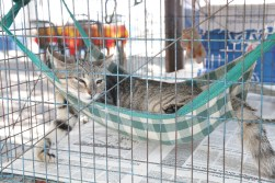 El Gato waiting for adoption