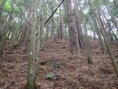 160802横川きのこ狩り01