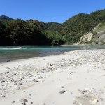 犀川のニジマスとブラウントラウト|長野県からの回答