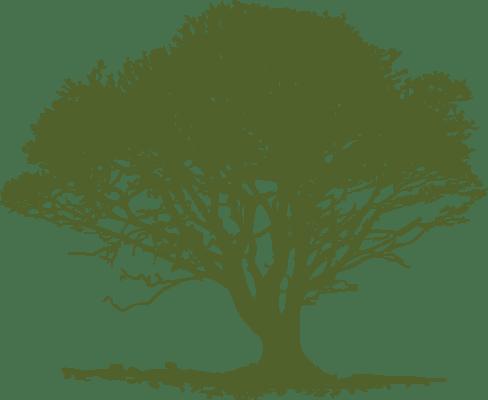 single-medium-green-tree