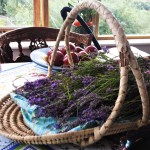 And soon there is a basket of lavender on the table!