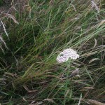And wild flowers