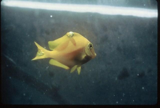 Saltwater aquarium diseases of a reef aquarium primer for Tropical fish diseases