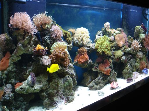 Saltwater Aquarium Nitrate