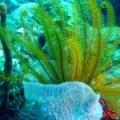 Terapia con Algas Marinas